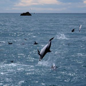 Kaikoura-Events-Events